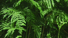 Ferns Stock Footage