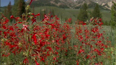 Red Flowers Mountain Range 03 Stock Footage