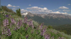 Wide Boulder Whiteclouds Lupines Stock Footage