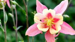 Flowers in the Garden Stock Footage