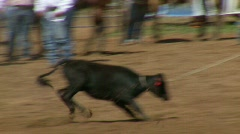 Rodeo Cowboys - Calf Roping in Slow Motion - Clip  3 of 7  Stock Footage