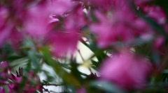 Violet Flowers Rack Focus 002 Stock Footage