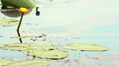 Lily on the waves Stock Footage