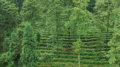 Stock video footage tea plantations of China Stock Footage