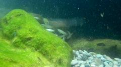 Sea life - stock footage