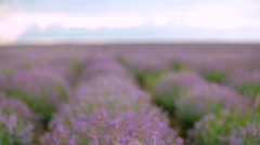 Spring lavender Stock Footage