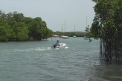 Puerto Rico - People in power boat navigating through mangroove channels Stock Footage