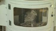 Japanese quail at laboratory Stock Footage