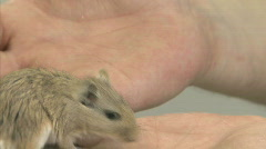 Lab rats Stock Footage