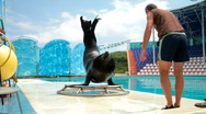 Sea lion and trainer Stock Footage