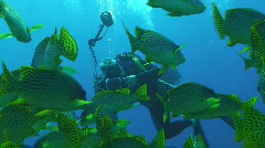 UW photographer taking pictures of shoal of fishes Stock Footage