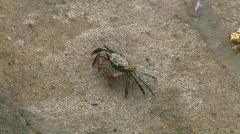 Crab Walking Down Side Of Rock Stock Footage