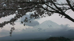Mount Fuji and cherry blossom. Mt Fuji is the highest mountain in Japan. Winter  Stock Footage