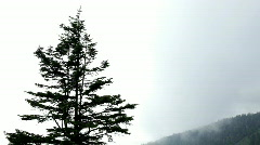 Tree with Mountain Smoke rolling in background Stock Footage