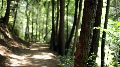 Dirt Trail going through Woods  Stock Footage