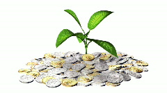 Growing plant and a lot of golden coins. Stock Footage