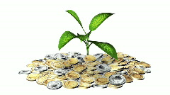 Growing plant and a lot of golden Euro coins. Stock Footage