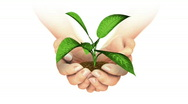 Plant Growing in hands. Stock Footage