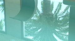 Palm tree reflect in water Stock Footage