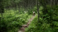 (1224) Woman Hiking Mountain Aspen Grove Forest Summer Wildflowers Stock Footage