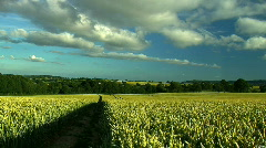 Wheat field, JVC GY-HM100E Stock Footage