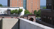 Stock Video Footage of Seagull on Building
