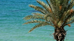 Green palm and sea Stock Footage