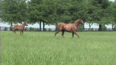 Mare and foal running Stock Footage