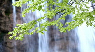 Stock Video Footage of Green tree near waterfall