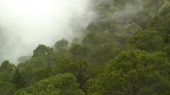 Mist blowing though the Trees, Erice, Sicily, Europe Stock Footage