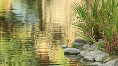 Water Ripples near Rocks and Reeds MS Stock Footage