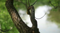 Shallow Focus Tree Branch HD Stock Footage