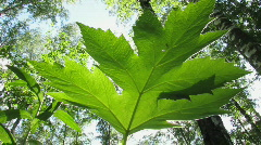 Green leaf 1 Stock Footage