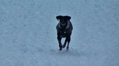 Black Dog in snow run to camera in Berlin park Stock Footage