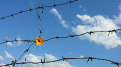 Barb wire 6 Stock Footage