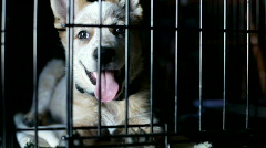 Lonely Puppy in Cage Stock Footage