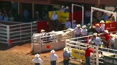 rodeo, steer wrestling, #3 - stock footage