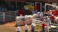 Rodeo, steer wrestling, #3 Stock Footage