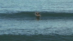 Surfer in New-Zealand Stock Footage