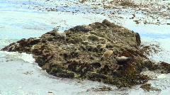 Harbor seals V5 - HD Stock Footage