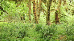 Rain Forest Understory Pan Stock Footage