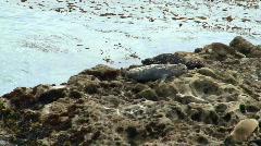 Harbor seals V3 - HD Stock Footage
