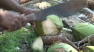 Stock Video Footage of opening a coconut
