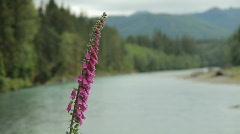 Flower to River Rack Focus Pan Stock Footage