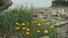 Washington Coast with Flowers Tilt Stock Footage