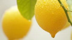 Two Lemons - stock footage