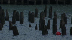 Old Pier Pilings Hudson River Stock Footage
