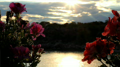 Flowers and sea at sunset Stock Footage