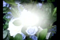 3517 Blue Flowers Background Stock Footage