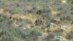 Deer on the Move Stock Footage